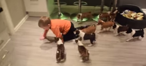 16匹の犬と赤ちゃん