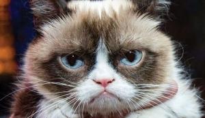 不機嫌な猫グランピーキャット