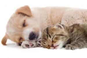 犬と猫の夏バテ対策