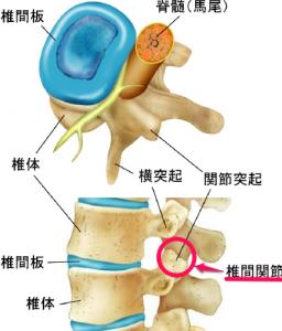 椎間関節の痛みの原因