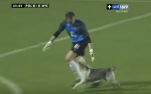 サッカーに試合中に乱入した犬とゴールキーパー