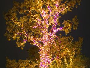 東京ミッドタウン「奇跡の木」