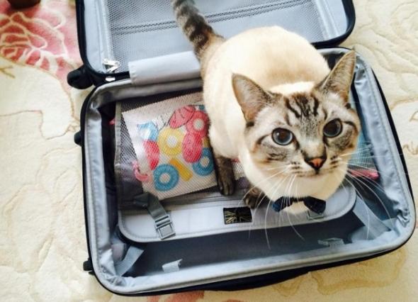 おひとりさまの海外旅行はあり派?ですか?