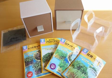 ブロッコリースプラウトの栽培キット