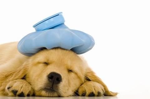 犬が下痢をする原因は?