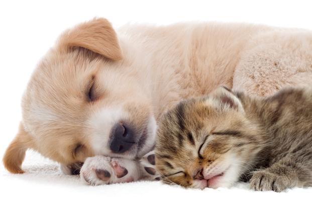 かわいい熟睡する猫と犬