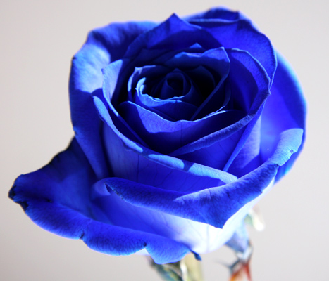 青いバラの意味