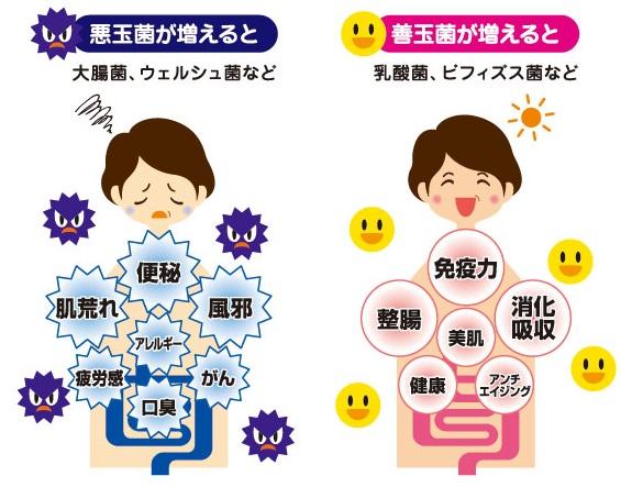 悪玉菌と善玉菌の比較図
